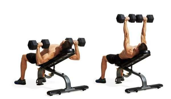 Incline Dumbbell Press تمرين